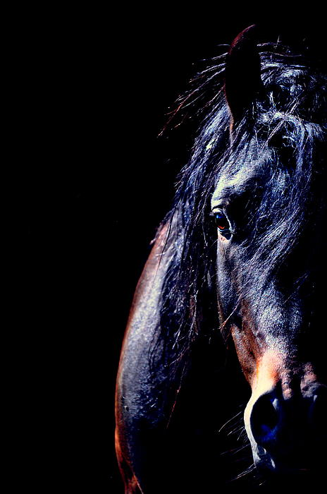 Horses Photograph - To The Soul by Emily Stauring