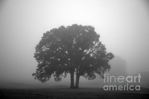 Tree Photograph - Together Always by Amanda Barcon
