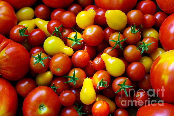 Abundance Photograph - Tomatoes Background by Carlos Caetano