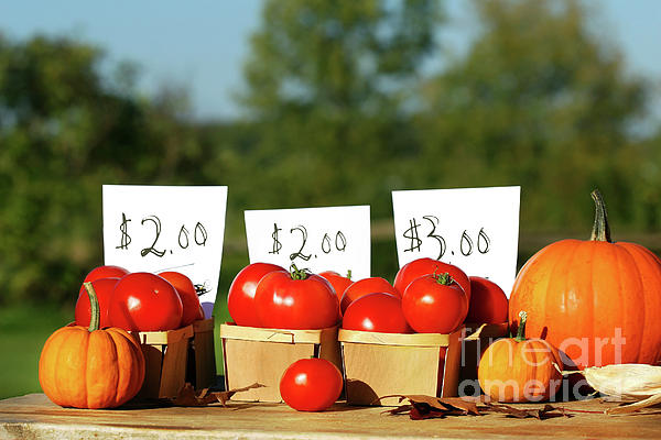Agriculture Photograph - Tomatoes For Sale by Sandra Cunningham