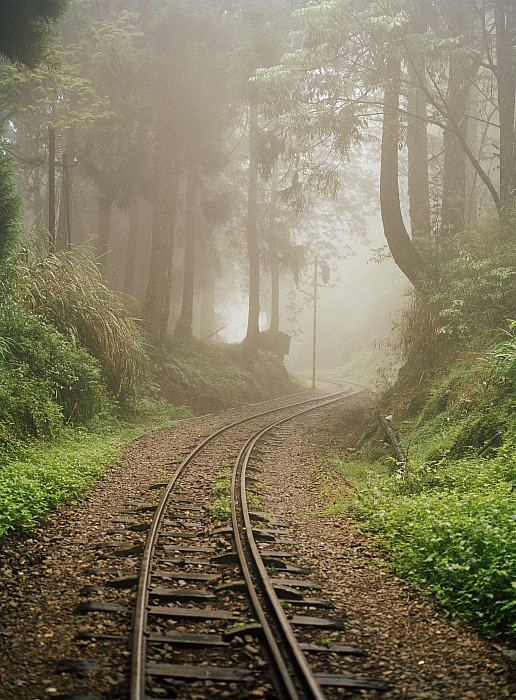 Outdoors Photograph - Train Tracks Found On The Forest Floor by Justin Guariglia