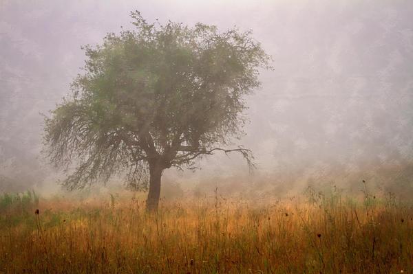 Barn Photograph - Tree In Fog by Debra and Dave Vanderlaan