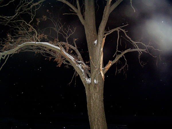 Night Photograph - Tree On A Dark Snowy Night by Victoria Sheldon