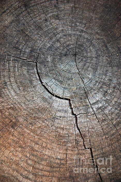 Abstract Photograph - Tree Trunk by Carlos Caetano