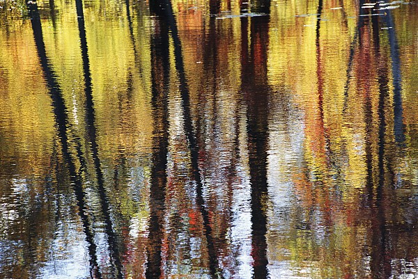 North America Photograph - Trees And Fall Foliage Reflected by Medford Taylor