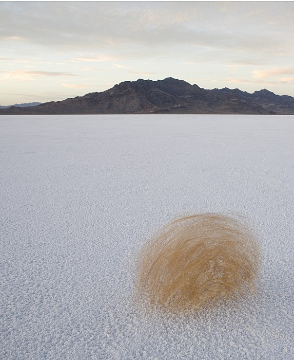Outdoors Photograph - Tumbleweed Spinning Over The Bonneville by John Burcham