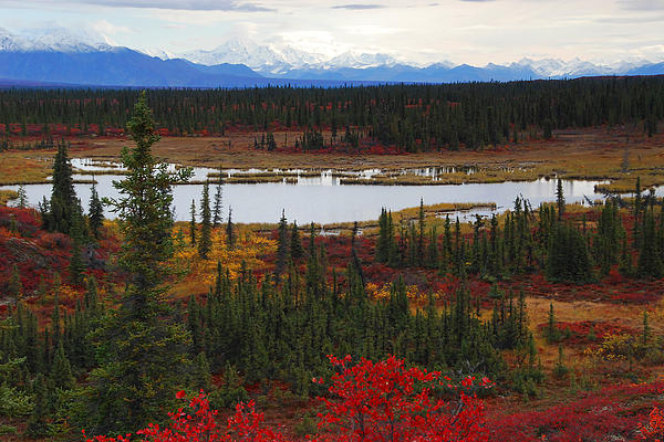 Tundra Landscape Photograph By Alan Lenk