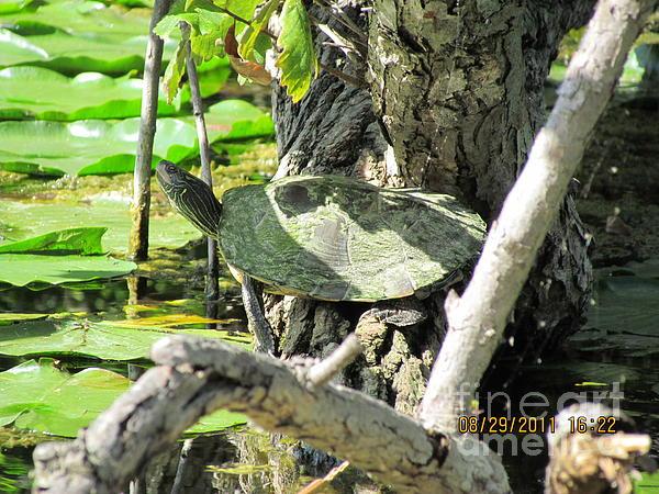 Turtle Photograph - Turtle Sun by Thomas Sterett