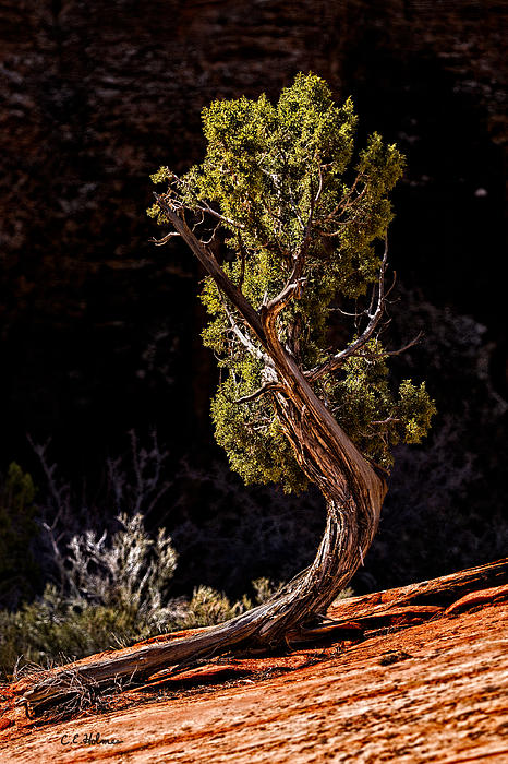 Zion National Park Photograph - Twisted Reach by Christopher Holmes