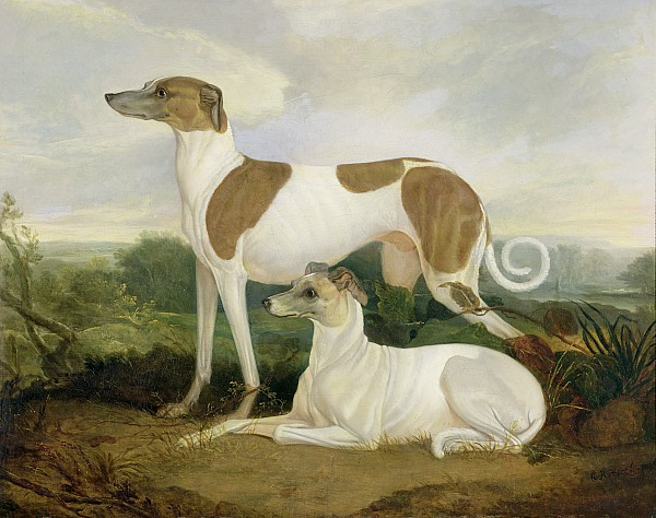 Xyc159885 Photograph - Two Greyhounds In A Landscape by Charles Hancock