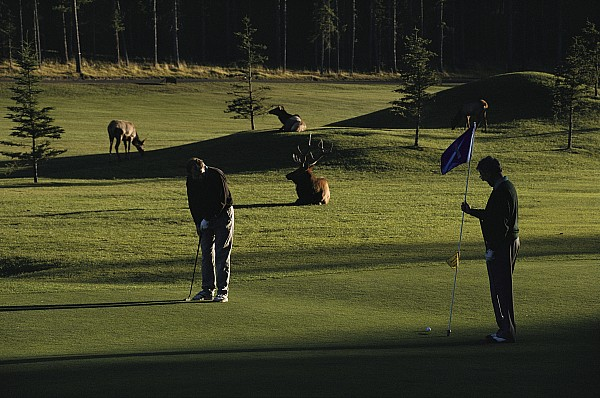 North America Photograph - Two People Play Golf While Elk Graze by Raymond Gehman
