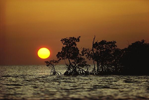 Solar Phenomena Photograph - Untitled by James P. Blair