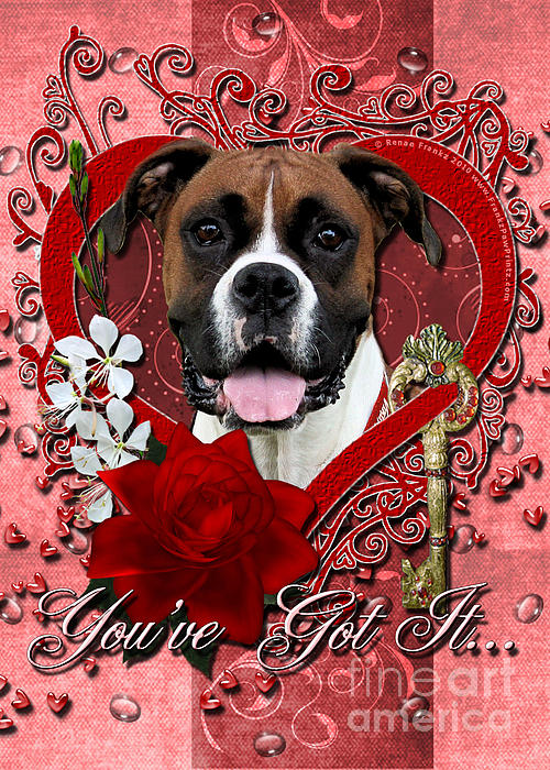 Boxer Digital Art - Valentines - Key To My Heart Boxer by Renae Laughner