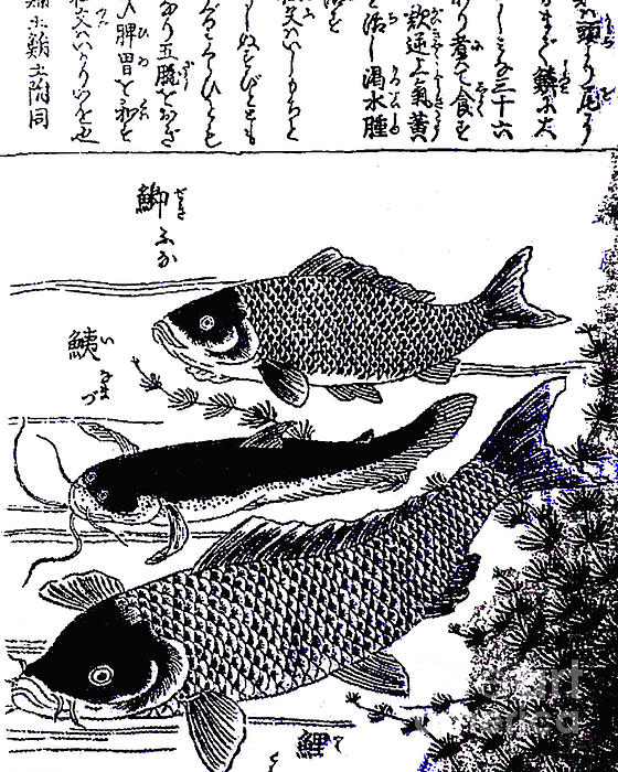 Fish Photograph - Very Old Chinese Ink Drawing by Merton Allen