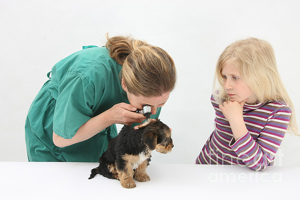 Fauna Photograph - Vet Using An Otoscope To Examine A Pups by Mark Taylor