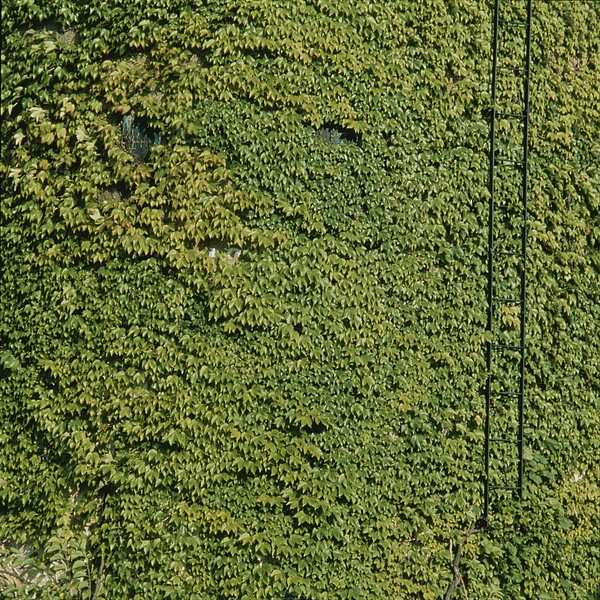 North America Photograph - Vines Grow On The Side Of An Abandonded by Sam Kittner