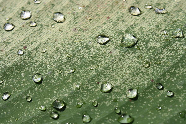 Water Drop Photograph - Water Drop by Gonca Yengin
