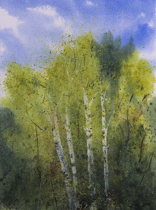 White Birch Painting - White Birch Trees by Debbie Homewood