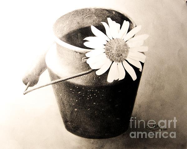 Pencils  Drawing - White Daisy by Muna Abdurrahman