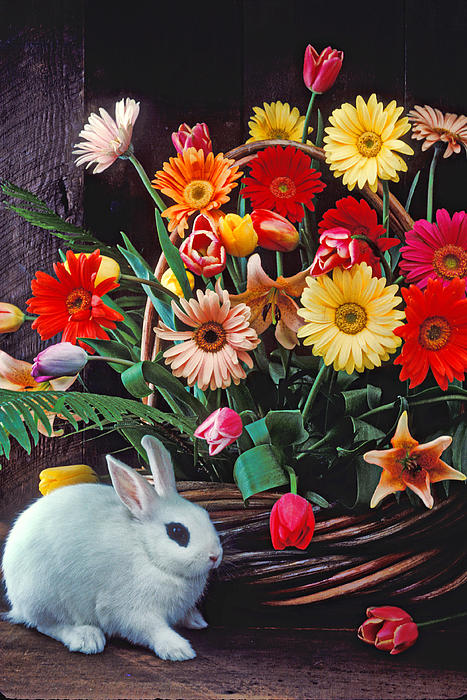 Bunny Photograph - White Rabbit By Basket Of Flowers by Garry Gay