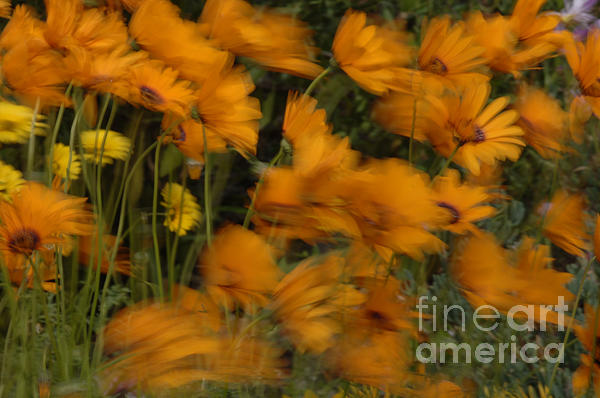 Flowers Photograph - Who Has Seen The Wind by Bob Christopher