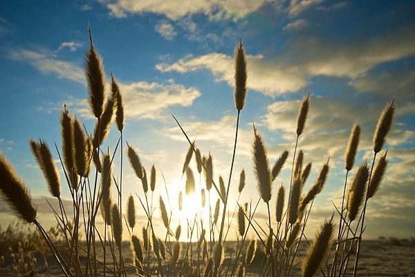 Agricultural Photograph - Wild Wheat Growing On The Shores by Brooke Whatnall