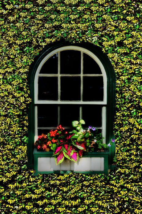 Window Photograph - Window On An Ivy Covered Wall by Bill Cannon