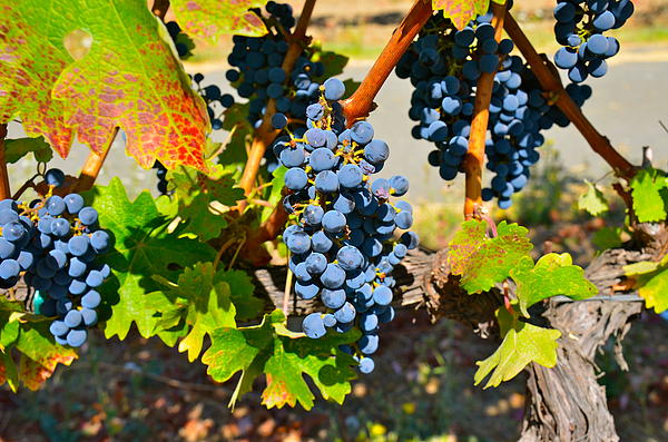 Wine Photograph - Wine Country by Gloria Wannow