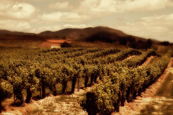 California Photograph - Wine Country by Peter Tellone