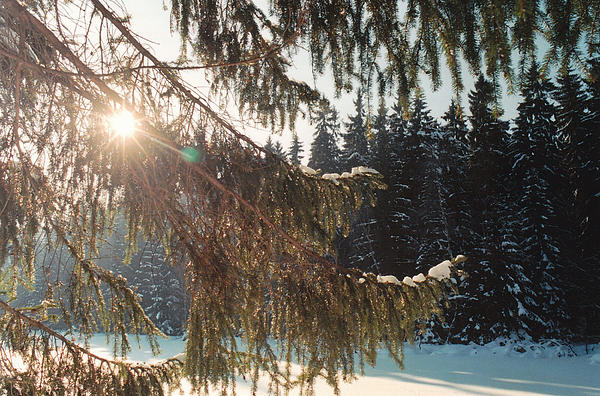 Winter Photograph - Winter by Franz Roth