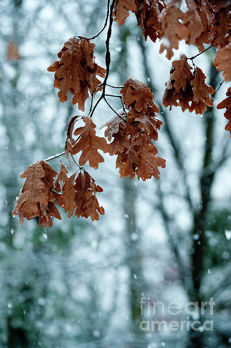 Sandra Bronstein Photograph - Winter Takes Hold by Sandra Bronstein