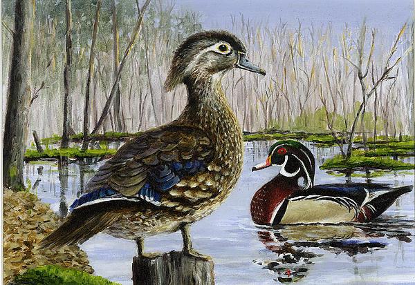 Wood Duck Painting - Wood Duck by Paul Gardner