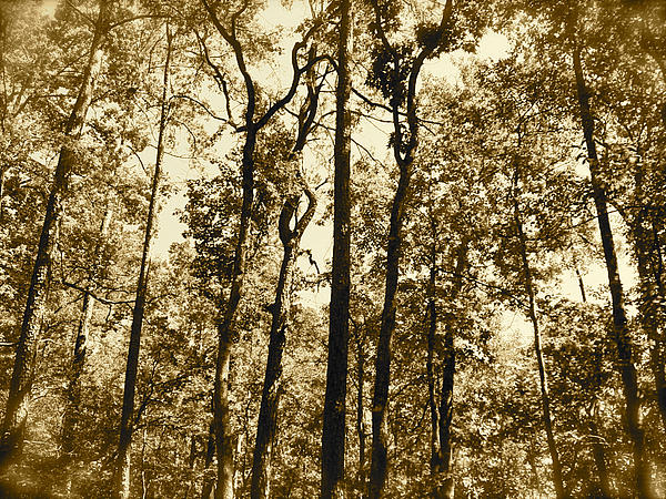 Trees Photograph - Woodland by Amber Hennessey
