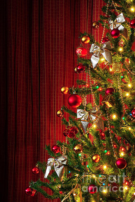 Artificial Photograph - Xmas Tree On Red by Carlos Caetano
