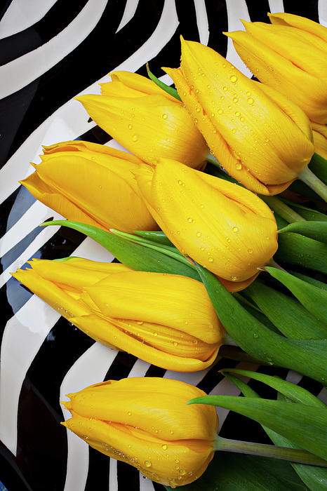 Yellow Photograph - Yellow Tulips On Striped Plate by Garry Gay