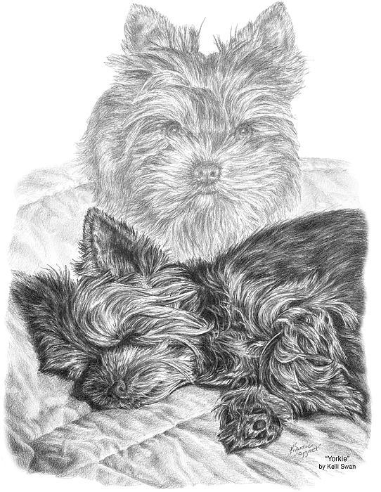 Yorkie Drawing - Yorkie - Yorkshire Terrier Dog Print by Kelli Swan