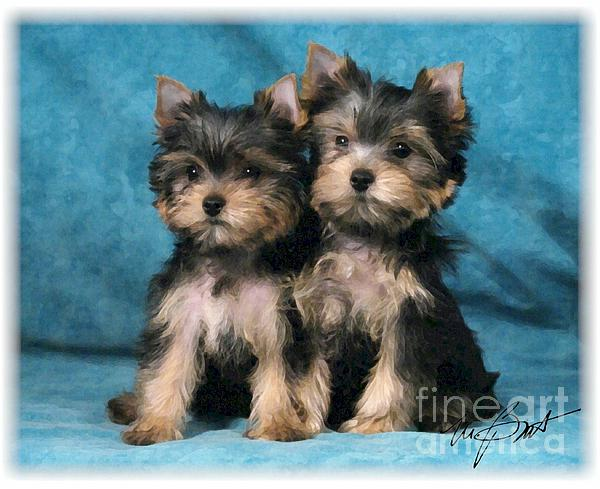 Yorkshire Digital Art - Yorkshire Terrier Pups 2 by Maxine Bochnia