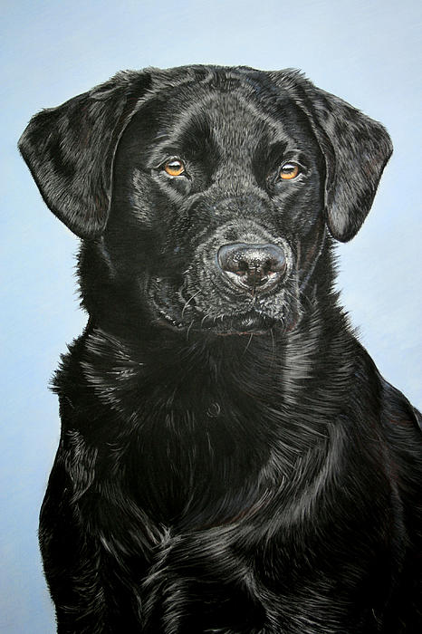 Dogs Pastel - Young Black Labrador by Lucy Swinburne