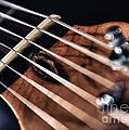 Guitar Strings by Stelios Kleanthous