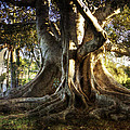 Roots by George Lenz