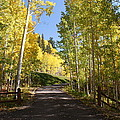 Telluride Colorado Fall by Michael J Bauer