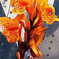 Ventura Flower by Ron Regalado