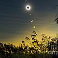Solar Eclipse Composite, Queensland by Philip Hart