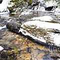 White Oak Run In Winter by Thomas R Fletcher