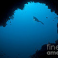 A Diver Explores A Cavern In Gorontalo by Steve Jones