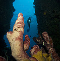 A Diver Looks Into A Cavern by Steve Jones
