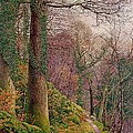A Path In The Wood by Edward Bentley