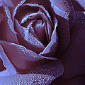 A Rose That Glitters by Michelle Ayn Potter