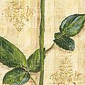Allie's Rose Sonata 1 by Debbie DeWitt