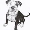 American Bull Dog As A Pup by Jack Pumphrey